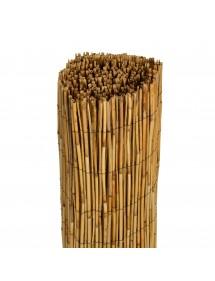 Bambú Chino 1X5 metros