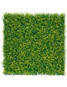 Plancha Jardín Vertical Buxus 50x50cm