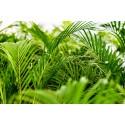 Plantas de Interior Verdes