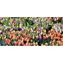 FLORISTERIA: Flor natural,Ramos y Cestas